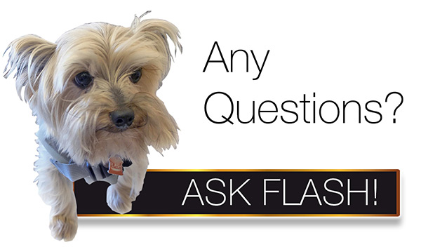 Ask Flash - Contact Us